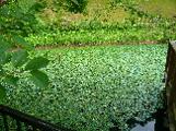小坂清水池親水公園